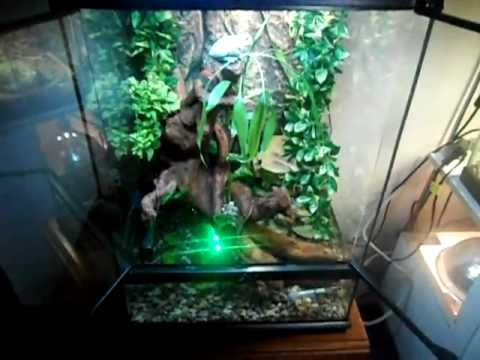 Blue Dumpy Tree Frog Terrarium Completed Youtube