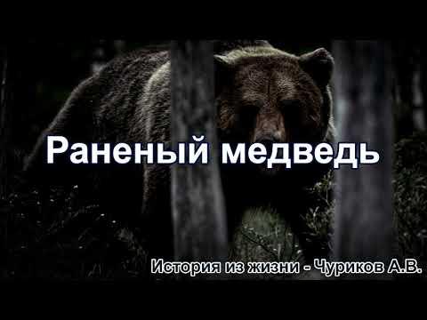 Раненый медведь. Чуриков А.В. Истории из жизни. МСЦ ЕХБ