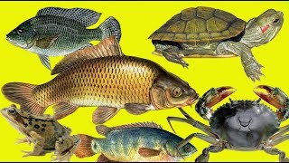 các con vật dưới nước, con cá, con cua, con ếch
