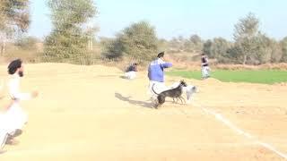 Dog race(2)