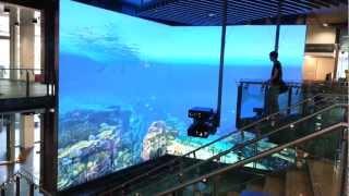 Virtual Reef QUT  |  Warwick Mellow  |  Animator
