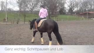 Lockeres Training, Stangenarbeit nach Ingrid Klimke, Gymnastizierung