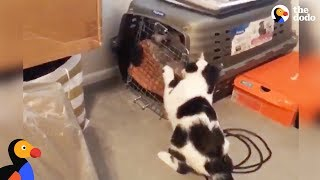 Cat Breaks Dogs Out Of Time Out | The Dodo