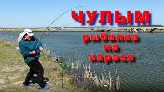 Рыбалка на реке Чулым Крупные караси