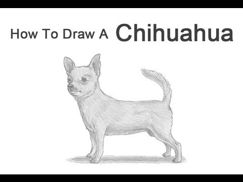 how to draw a dog chihuahua