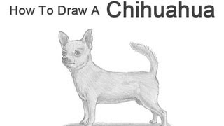 How to Draw a Dog (Chihuahua)