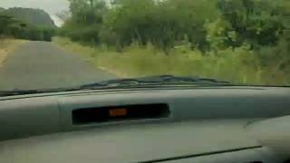 charging elephant at chinnar.mp4