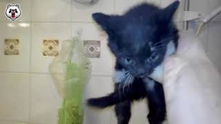 Cat Rescue Compilation (Real Life Heroes)