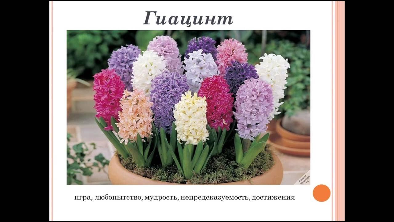 Язык цветов  Что означает и символизирует каждый цветок?