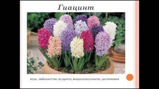 видео Язык цветов. Орхидея является символом утонченности, мудрости и аристократизма. Орхидея нередко символизирует любовь и красоту, а также семейный уют. Розовый цвет изысканных лепестков орхидеи означает чистую привязанность