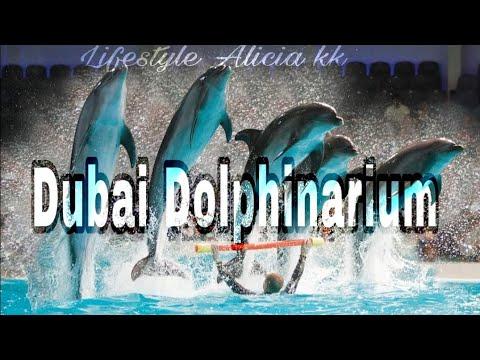 Dubai Dolphinarium #Dolphin_and_seal_shows