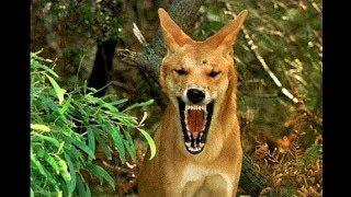 19 STRANGEST Animals Found In Australia