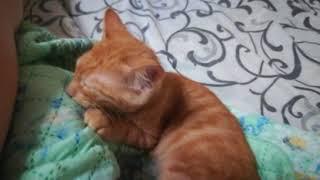 Котенок Чапаев скучает за мамкой; Одесса