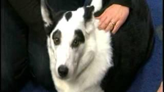 Treat Your Dog To Massage