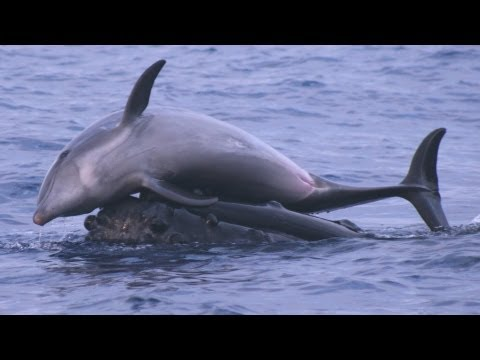 Science Bulletins: Whales Give Dolphins a Lift
