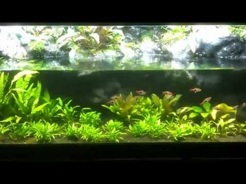 50g Paludarium With Diy Background And Planted