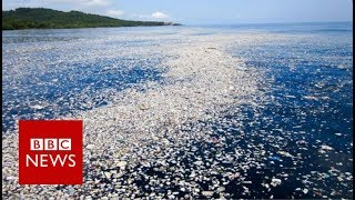 The plastic bottle scheme that could help clean the oceans - BBC News