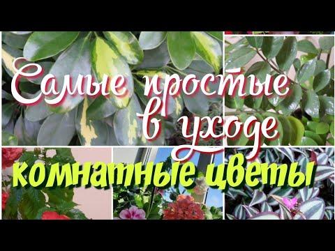 Самые простые в уходе комнатные цветы.Неприхотливые комнатные цветы.