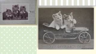 Коты на старинных фотографиях