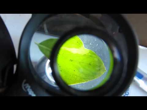 Microscopio simple rudimentario (para niños).
