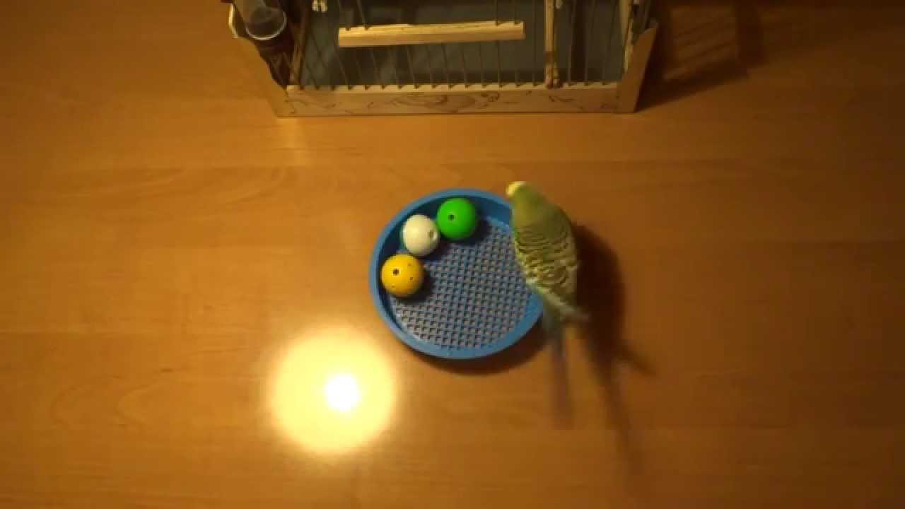 (Игра называется) Вырасти попугая - YouTube