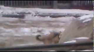 пес после виагры(, 2013-12-02T07:44:11.000Z)