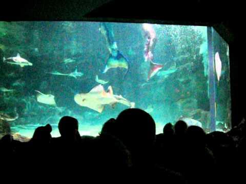Mermaid Show At Ripley S Myrtle Beach