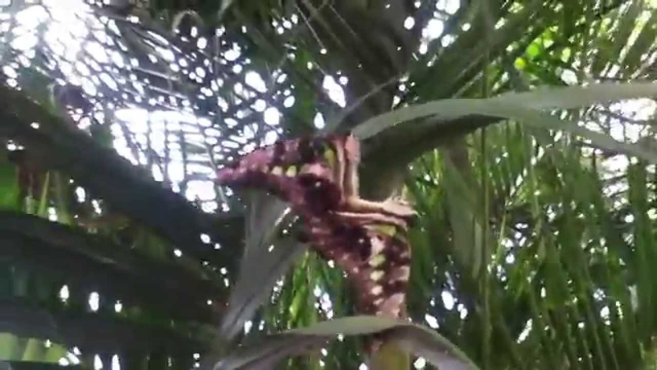 Male And Female Butterfly Having Sexual Intercourse - Youtube-8251