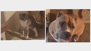 Dog VS Cat | Who's Trick Was Better