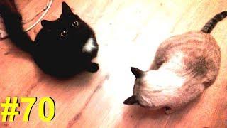 Коты - сыроманы