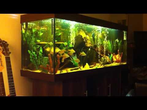 Juwel Rio 400 Tropical Tank (HD)