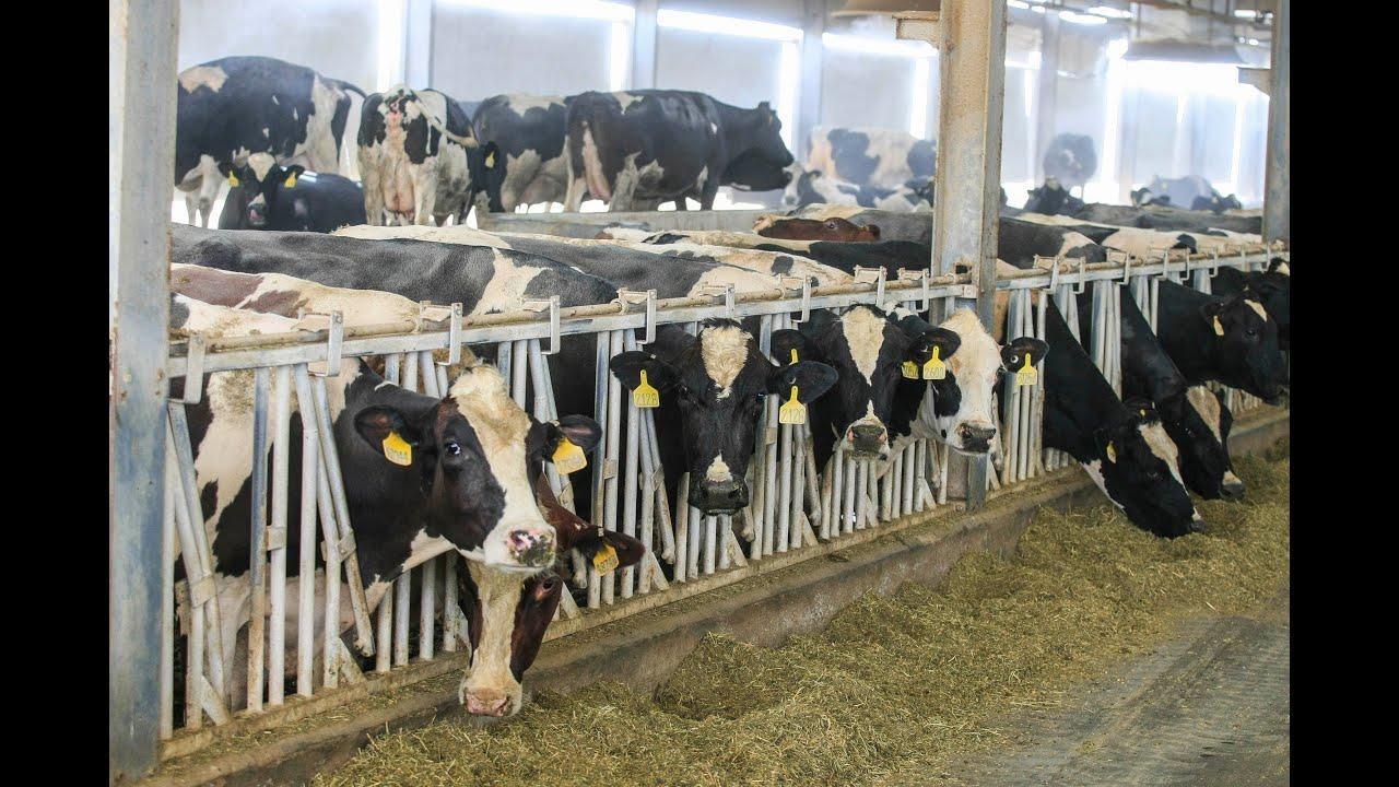 Milk factory v - 5 7