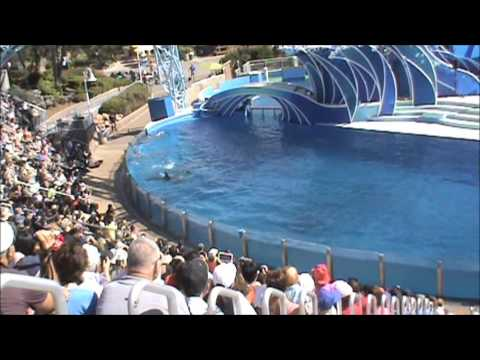 Seaworld San Diego 2014   seaworld san diego dolphin show