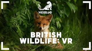VIRTUALLY WILD | British Wildlife VR
