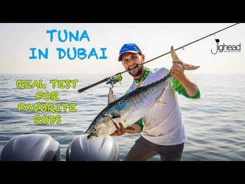 JIGHEAD TV: Real test of Favorite rods in Dubai - Tuna season