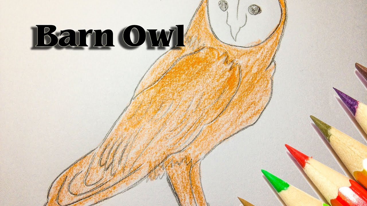 How To Draw A Barn Owl Step By Step Owl Drawing Simple Sld Youtube