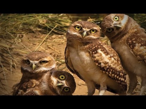 Amazing Funny Owls 🦉😂 Cute and Funny Owls Playing (Part 2) [Funny Pets]