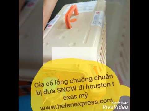 Vận chuyển chó Bắc Kinh Lai Nhật đi Houston, Mỹ tại Helen Express