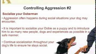 How To Control Aggression In A Doberman Pinscher