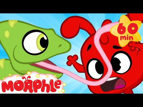 Funny Animals! Morphle meets a chameleon. Funny and cute animal cartoons for kids