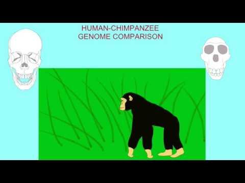 general biology 2 test 1 review cladistics 2