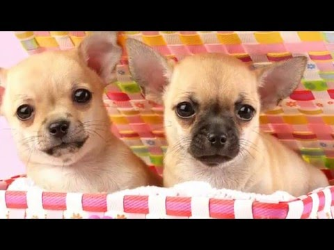 Gambar Anak Anjing Lucu - Cute Puppies and Kittens in The World - Funny Dogs and Cats.