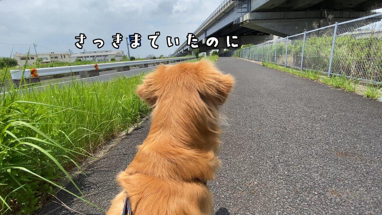 散歩中に突然飼い主がいなくなった時の愛犬の反応がかわいいw