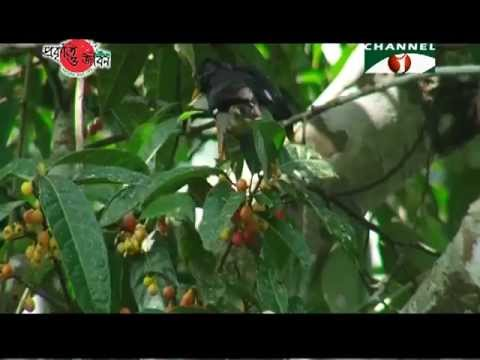 Nature and Life - Episode 104 (Song Birds)