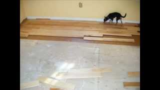 Canadian Maple Hardwood Installation