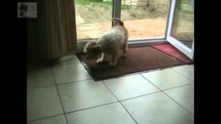 Собака вытирает ноги