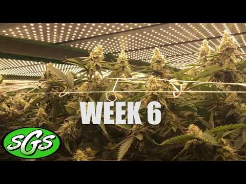 SGS Vertical Sea of Green: Week 6 of 8