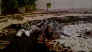Кошка дышит как собака (cat is breathing like a dog)