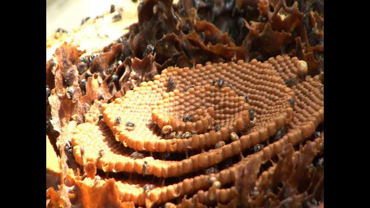 Moving Your New Honey Bee Colony