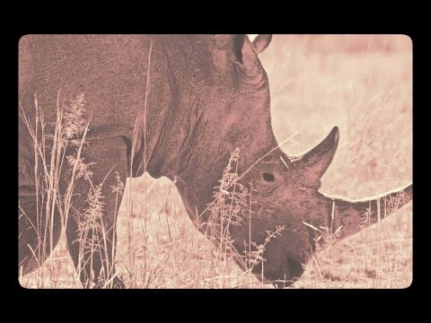 The Threatened Life of Rhino in South Africa
